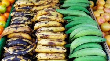 Bakbanaan/plantain, een veelzijdige groente