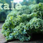 Kale, green superfood!